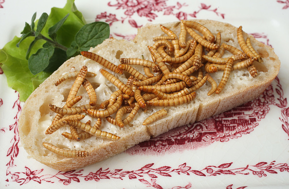 飲食「Insects: Our Food Of The Future?」:写真・画像(3)[壁紙.com]