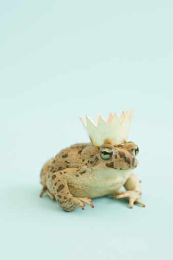 Prince - Royal Person「Frog wearing crown」:スマホ壁紙(4)