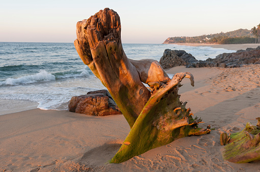 Sayulita「Driftwood in the sand on a beach along the coast; sayulita mexico」:スマホ壁紙(17)