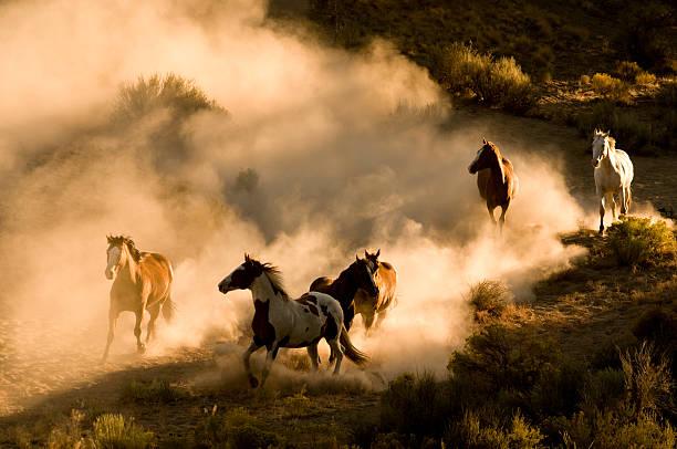 Six Wild Horses running across desert-kicking up dust:スマホ壁紙(壁紙.com)