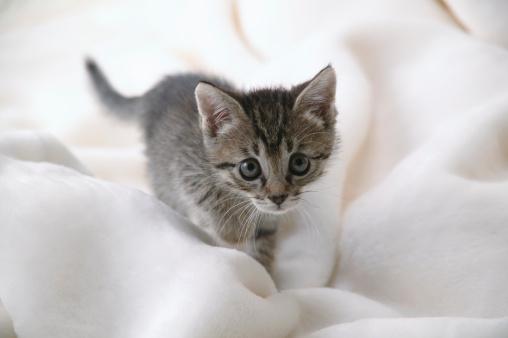 Mixed-Breed Cat「Mixed breed kitten」:スマホ壁紙(17)