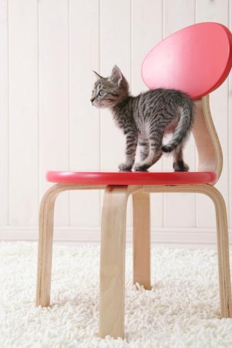 Kitten「Mixed breed kitten standing on chair」:スマホ壁紙(3)