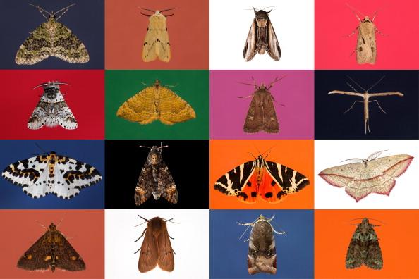 Trapped「Annual Moth Night Count」:写真・画像(11)[壁紙.com]