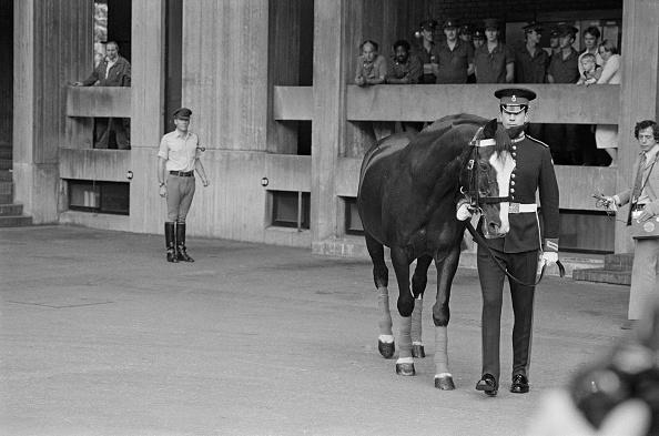 Horse「Pedersen With Sefton」:写真・画像(12)[壁紙.com]