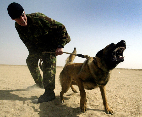 Anger「Royal Army Veterinary Corps Train Attack Dogs In Kuwait」:写真・画像(8)[壁紙.com]