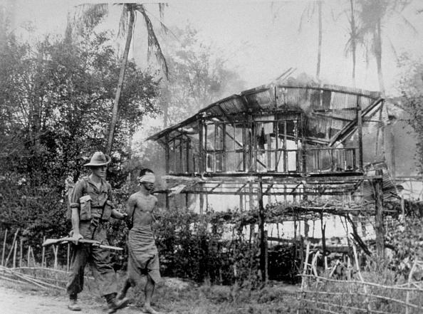 Tropical Rainforest「Japanese Prisoner」:写真・画像(8)[壁紙.com]