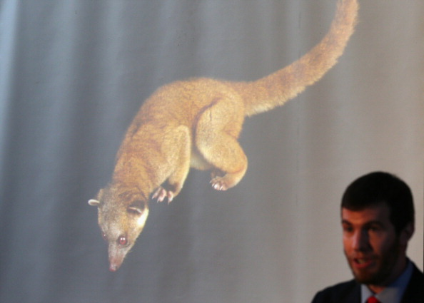 Animals Hunting「Smithsonian Announces Discovery Of A New Species Of Mammal」:写真・画像(11)[壁紙.com]