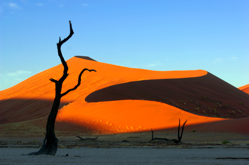Namibia「Morning light on a dune with tree in foreground」:スマホ壁紙(0)