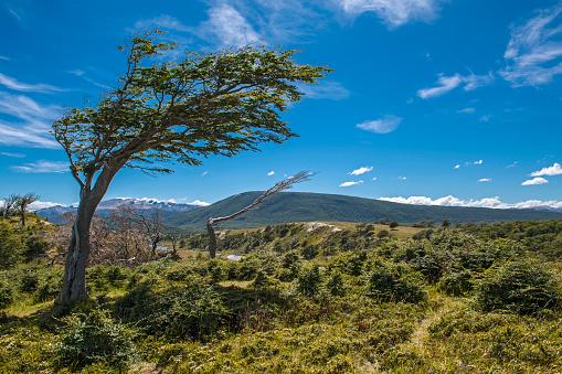 cloud「Wind beaten tree in Tierra del Fuego, Argentina 」:スマホ壁紙(9)