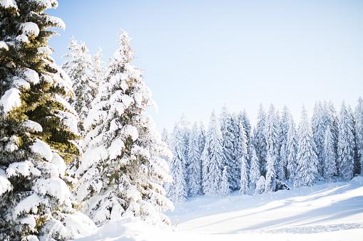 スキー「スキースロープ 」:スマホ壁紙(18)