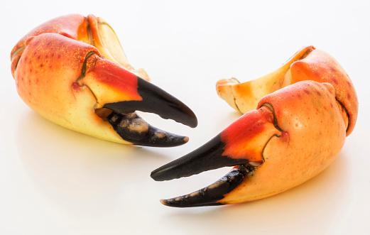 Claw「Stone crab claws on white background」:スマホ壁紙(18)
