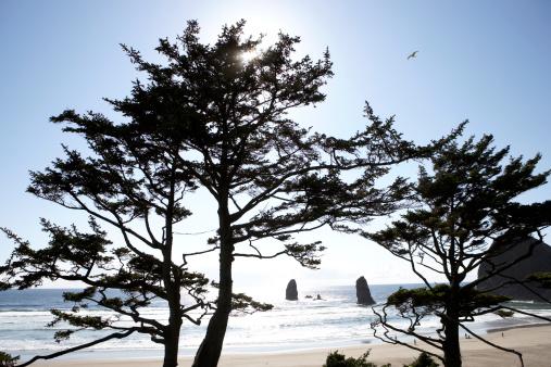 Cannon Beach「USA, Oregon, Pine trees on Cannon beach」:スマホ壁紙(4)