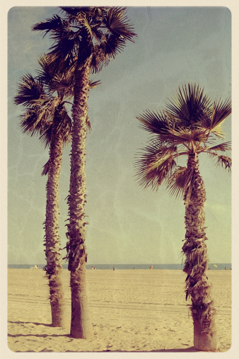 Souvenir「Three Palm Trees on Newport Beach - Vintage Postcard」:スマホ壁紙(4)