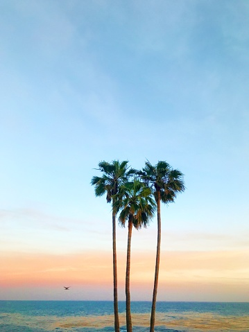 Southern California「Three palm trees in the shape of a heart, Laguna Beach, Orange County, California, America, USA」:スマホ壁紙(8)