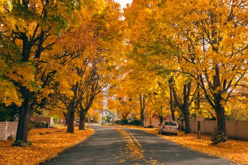 秋「USA, Oregon, Salem, treelined autumn lane」:スマホ壁紙(11)