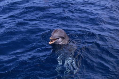 イルカ「Dolphin swimming」:スマホ壁紙(9)