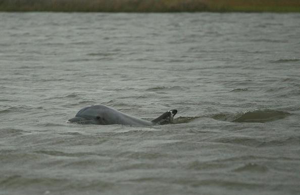 Aquatic Organism「Massive Oil Slick Reaches Louisiana Gulf Coast」:写真・画像(15)[壁紙.com]