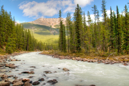 Water's Edge「Athabasca River, Jasper National Park, Alberta」:スマホ壁紙(7)