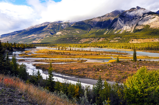 Athabasca River「Athabasca River with grazing elk in Jasper National Park,Alberta,Canada」:スマホ壁紙(5)