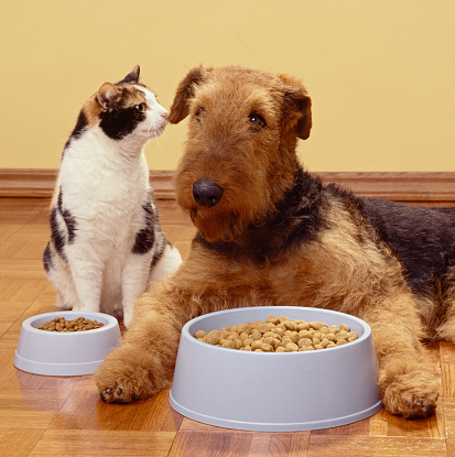 Pet Food「Calico cat and terrier with food bowls side by side」:スマホ壁紙(14)