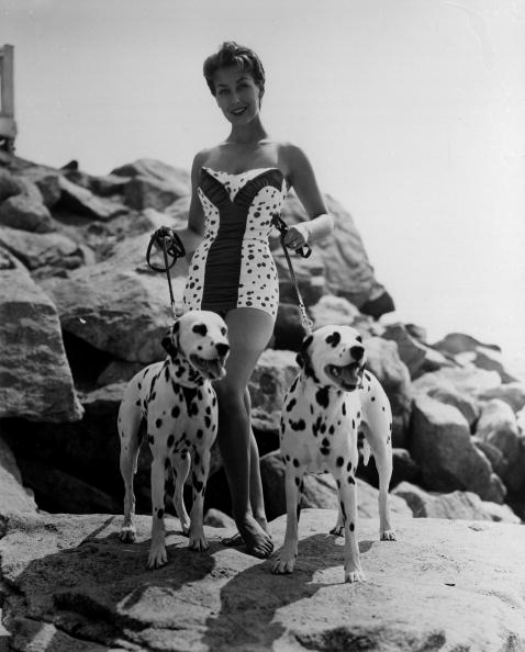 動物「Spotty Swimsuit」:写真・画像(15)[壁紙.com]