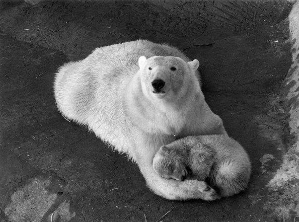 Cub「Cynthia's Cub」:写真・画像(14)[壁紙.com]