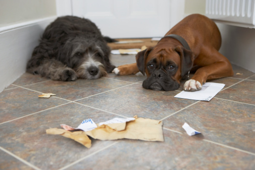 Mischief「Two dogs in hallway, one with paw on letter」:スマホ壁紙(13)