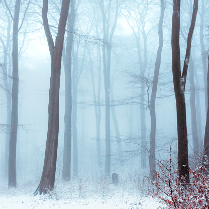 Mystery「Fog in snowcapped winter forest」:スマホ壁紙(15)