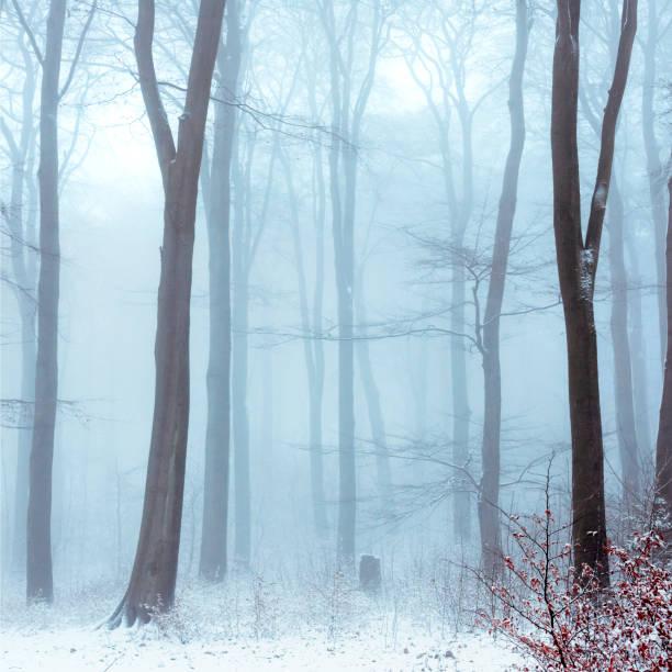 Fog in snowcapped winter forest:スマホ壁紙(壁紙.com)
