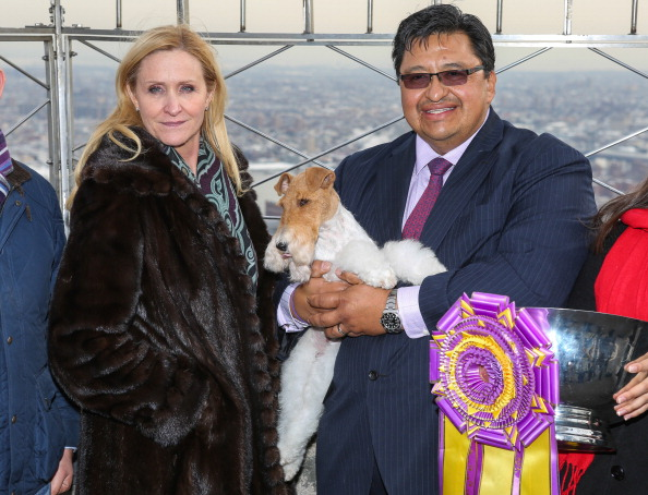 star sky「'Best In Show' Winner Sky The Fox Terrier Visits The Empire State Building」:写真・画像(14)[壁紙.com]