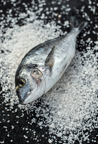 Sea Bream「Raw sea bream fish on salt」:スマホ壁紙(16)