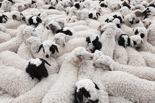Wool「China Inner Mongolia」:スマホ壁紙(17)