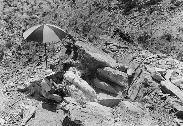 Incomplete「Fossil Excavation」:写真・画像(7)[壁紙.com]