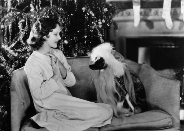 Sofa「Canine Santa」:写真・画像(18)[壁紙.com]