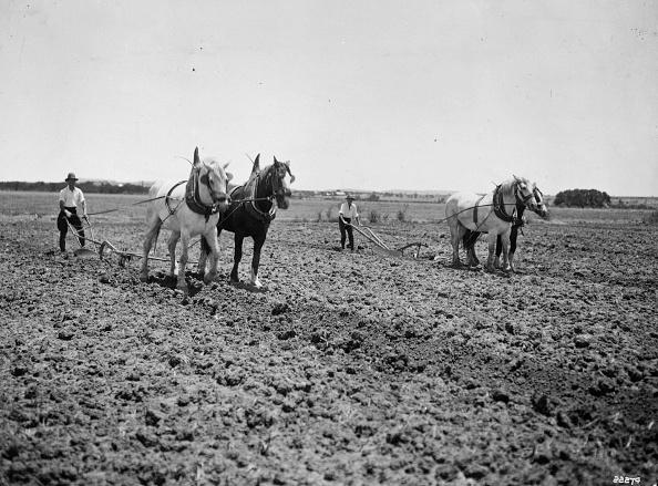Plowed Field「Irrigation Furrows」:写真・画像(13)[壁紙.com]