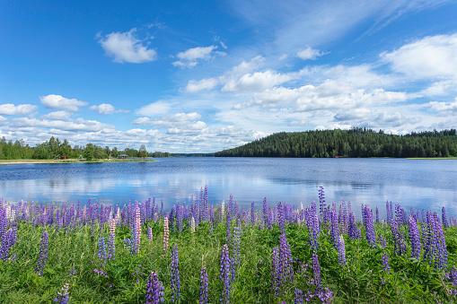 Dalarna「Summer by a lake in Dalarna」:スマホ壁紙(10)