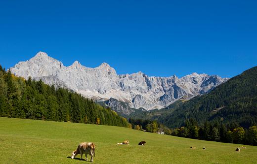 Dachstein Mountains「Austria, Salzburg State, Filzmoos, Hachau, alpine meadow, View to Dachstein, Dachstein massif」:スマホ壁紙(14)
