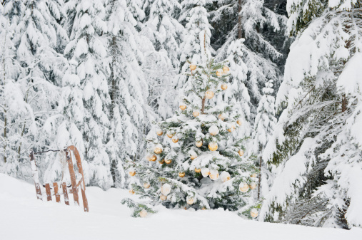 Sled「Austria, Salzburg County, Christmas tree and sledge in snowy lands」:スマホ壁紙(9)