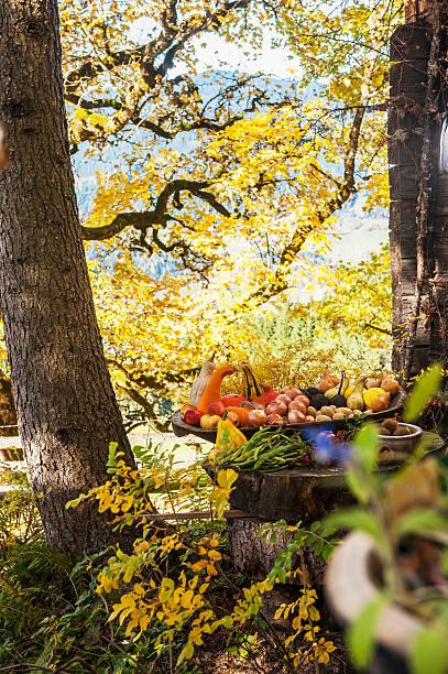 Austria, Salzburg Country, Various harvested fruits in garden:スマホ壁紙(壁紙.com)