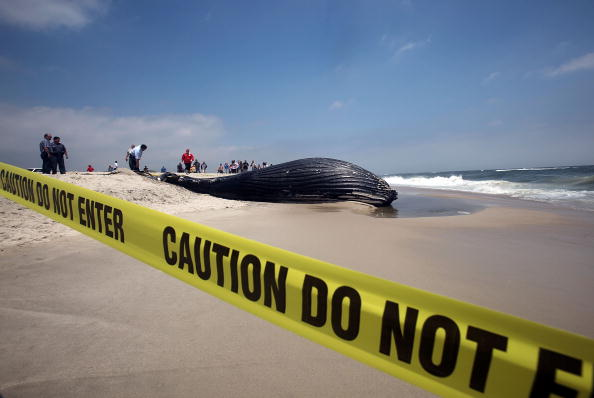 East「Whale Washes Ashore On Long Island Beach」:写真・画像(11)[壁紙.com]