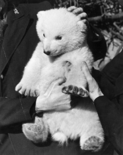 Fred Morley「Baby Brumas」:写真・画像(17)[壁紙.com]