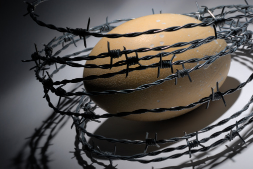 Surrounding「Ostrich egg surrounded by barbed wire」:スマホ壁紙(5)