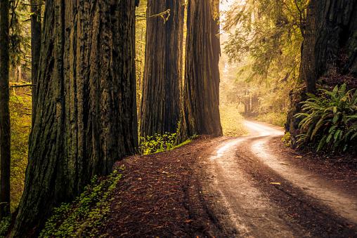 Dirt Road「Howland Hill Road, California.」:スマホ壁紙(14)