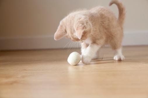 Kitten「薄いジンジャー、白の小さなキトンで遊ぶボール」:スマホ壁紙(16)