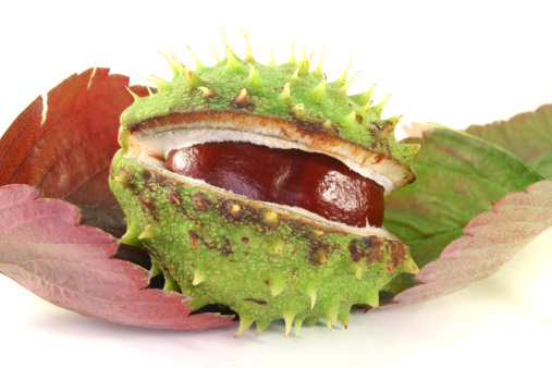 Chestnut - Food「Chestnuts on autumn leaves」:スマホ壁紙(6)