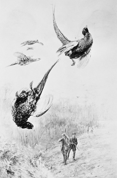 Spencer Arnold Collection「Pheasant Shooting」:写真・画像(11)[壁紙.com]