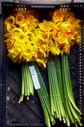 水仙「Cormish Daffodils」:スマホ壁紙(0)