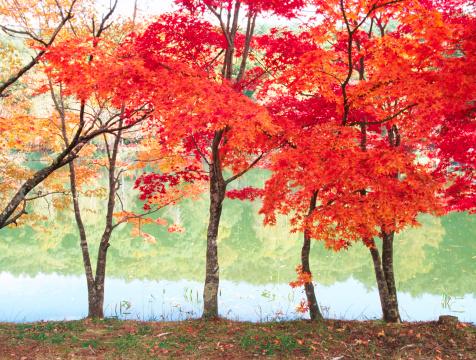紅葉「日本の秋の風景」:スマホ壁紙(6)