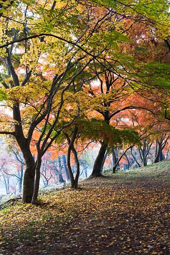 長瀞「日本の秋の風景」:スマホ壁紙(1)