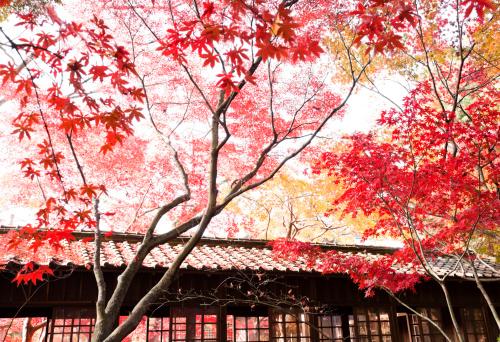 紅葉「日本の秋の風景」:スマホ壁紙(5)